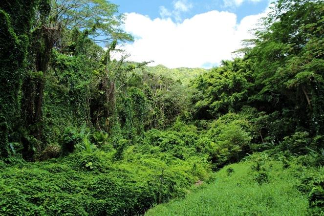 Oahu Honolulu Hawaii Guide on sunscreenandplanes.com (5)