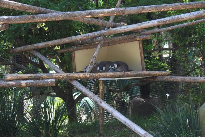 San Diego Safari Park. Go on the Caravan Safari tour where you can feed giraffes and rhinos! On sunscreenandplanes.com (14)